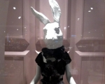 bunny-in-the-glass-case