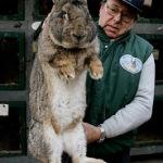 Is this what Easter Bunny looks like?