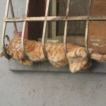 cat can sleep anywhere 150x150 Jan Brewer: The New Face for the Fight Against Glossophobia